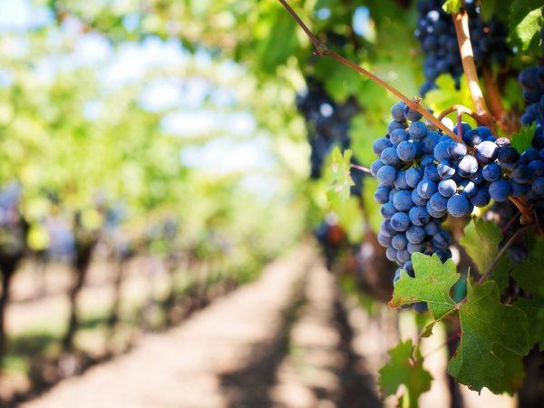 farm-farming-fruits-39511 (1)